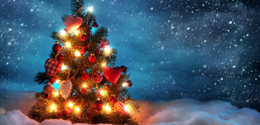 Top 5 Tips For Shopping For The Perfect Christmas Tree
