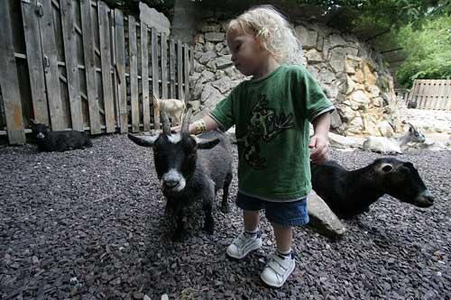 petting-zoo-resize