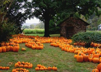 picked-pumpkins-resize