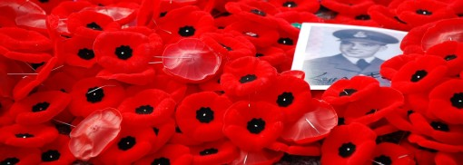 poppies remembrance day photo