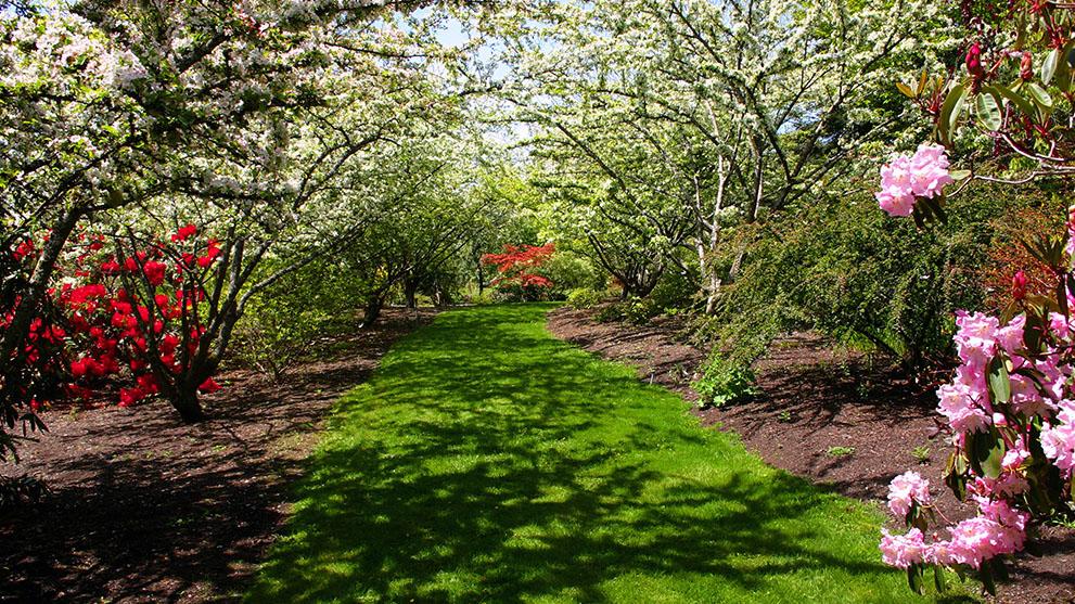 Darts hill garden openings 123dentist for Evergreen landscapes christchurch