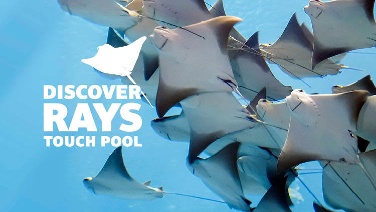 Discover Rays at Vancouver Aquarium in Vancouver