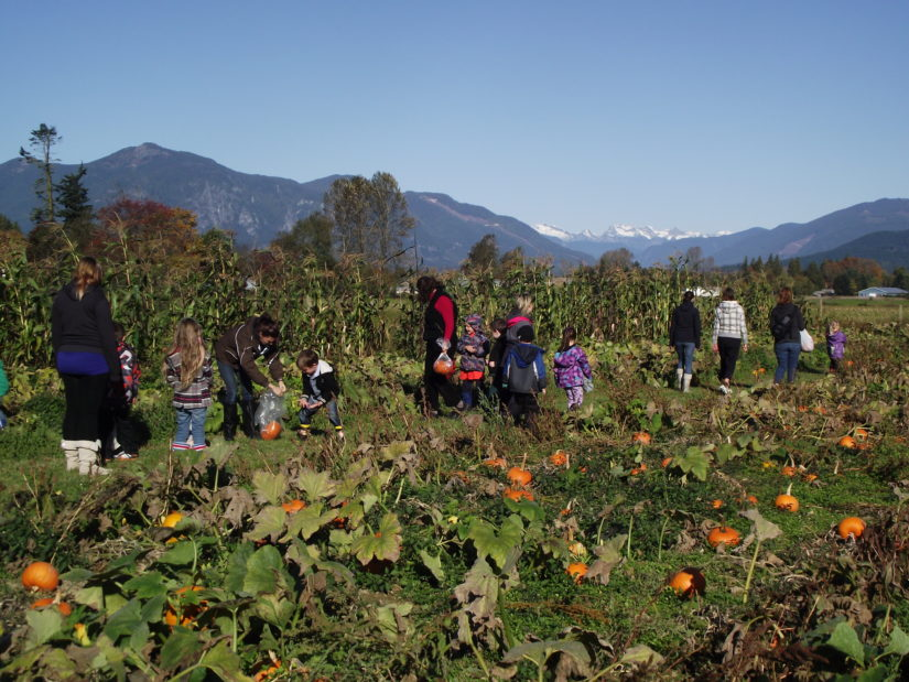 Petey's Pumpkin Patch in Chilliwack