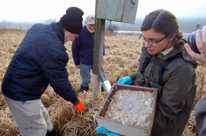 Nest Box Program in Burnaby