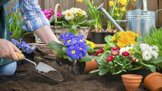 3rd Annual Spring Plant Sale in Chilliwack