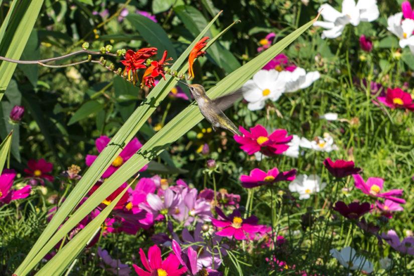 Garden Workshop: Canada 150 Planter in Coquitlam
