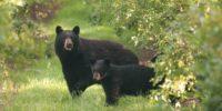 Bear Everything: Opening Reception