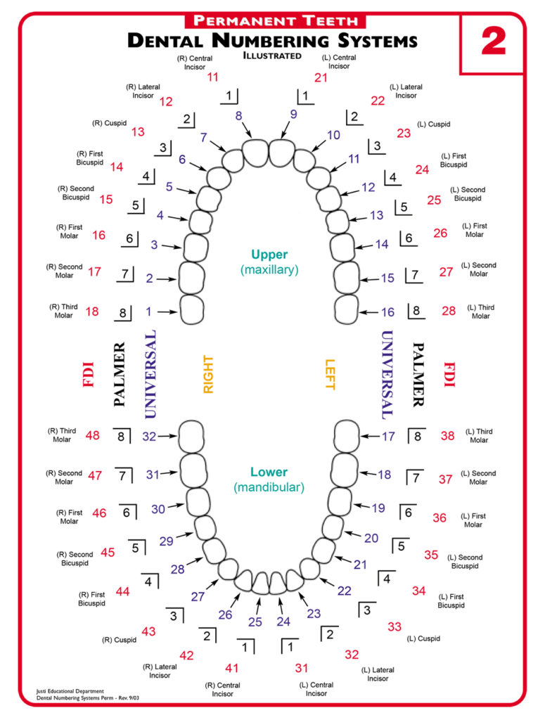 Teeth Number Systems - CLICK TO ENLARGE
