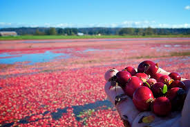 Fort Langley Cranberry Festival in Aldergrove
