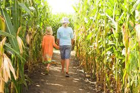 Haunted Corn Maze in Abbotsford
