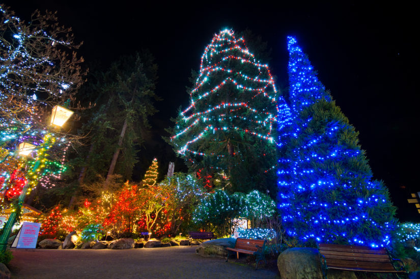 Canyon Lights at Capilano Suspension Bridge in North Vancouver