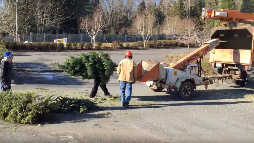 Christmas Tree Chipping & Bottle Drive For Youth in Surrey