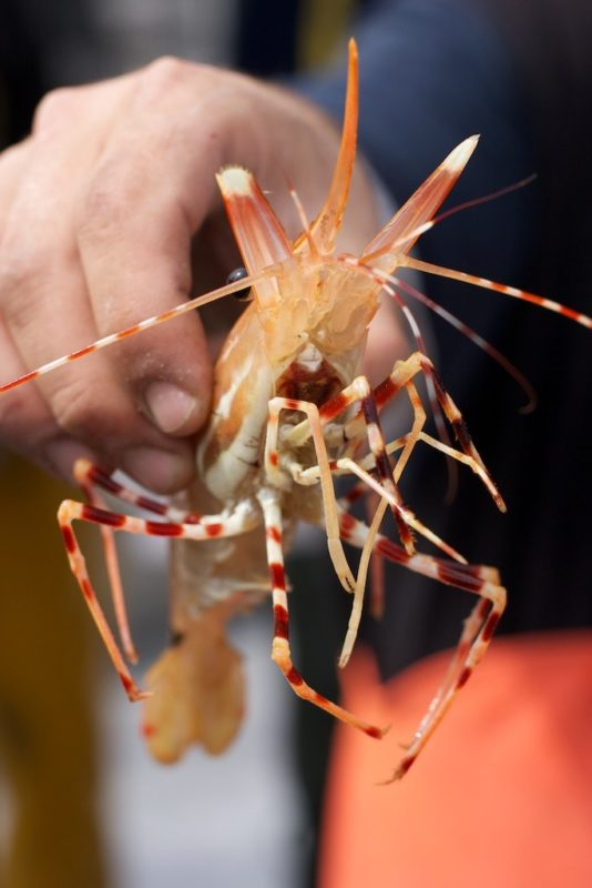 Spot Prawn Festival 2018 in North Vancouver
