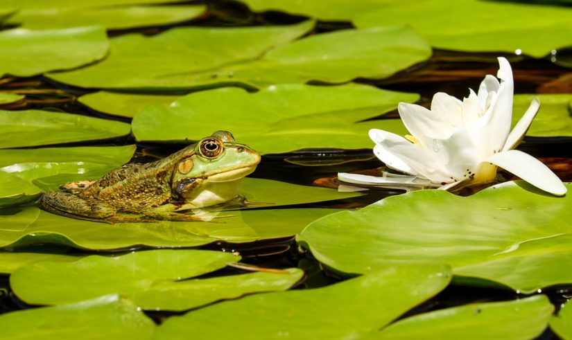 Frog Pond Safari in Aldergrove
