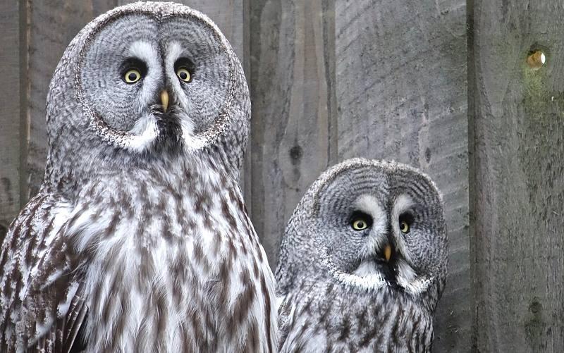 Owl Hoot-enanny 2019 in Aldergrove