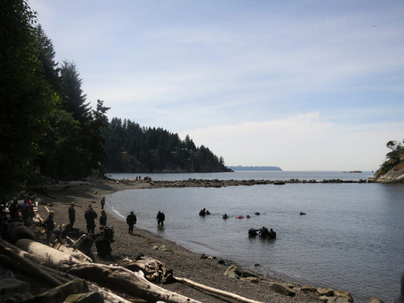 Community Shoreline Cleanup 2019 in West Vancouver