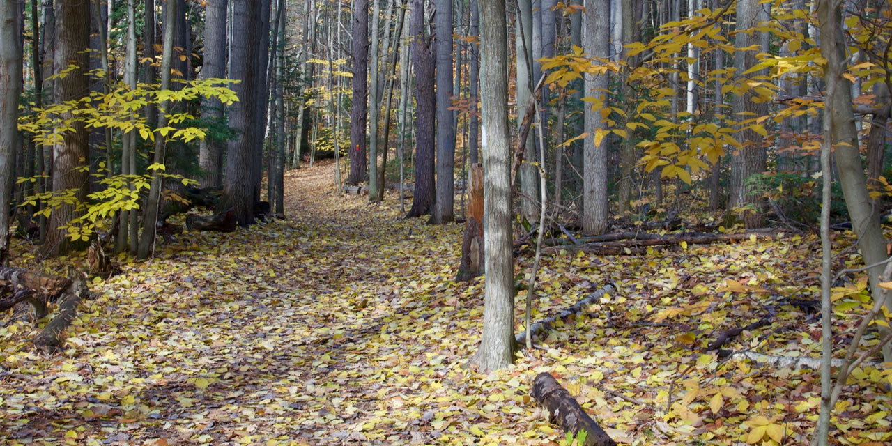 Hiking trails near Barrie Ontario