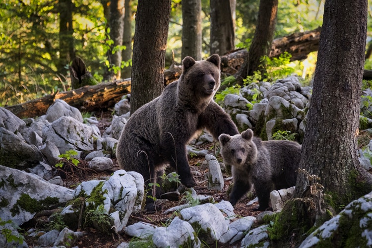 Amazing Animal Moms in Maple Ridge