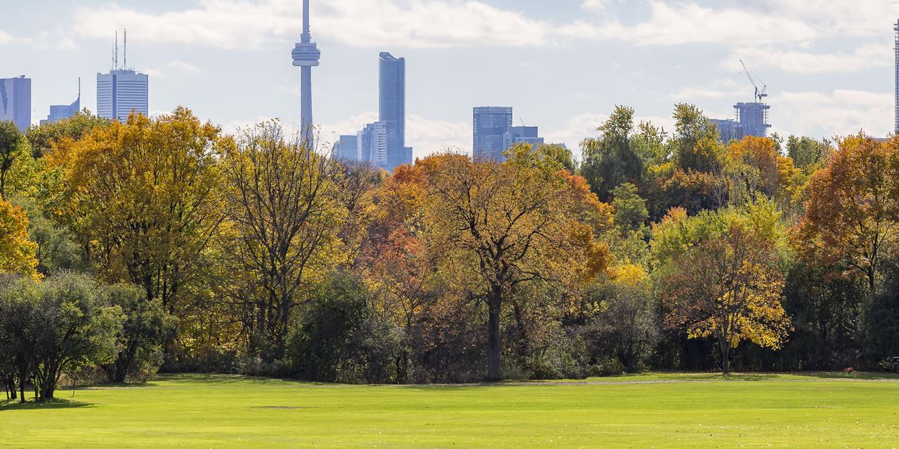 Toronto skyline from park