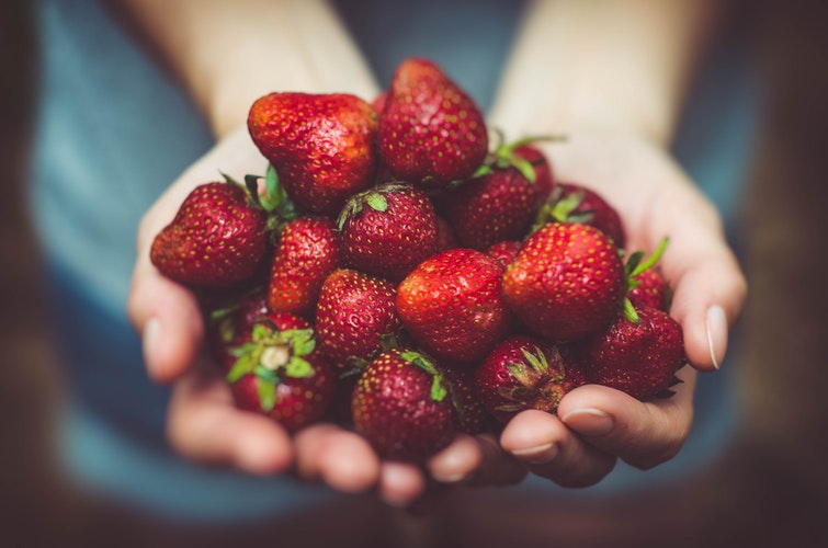 Strawberry Folk Fest in Stoney Creek