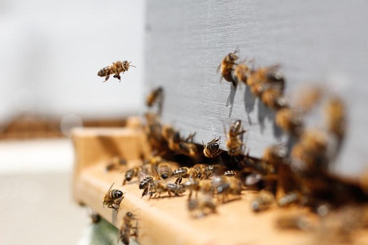 Honeybee Festival in Surrey