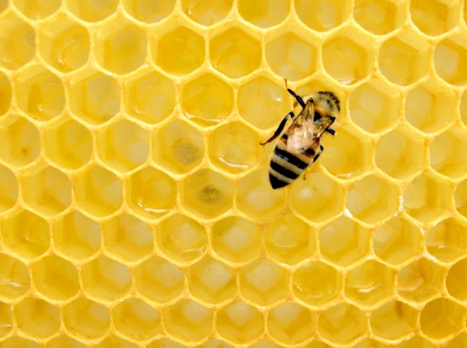 Honey Harvest at the Farmers Market in Innisfil