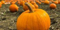 Pumpkin Giveaway