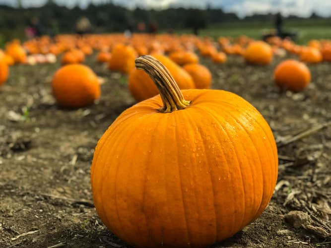 Pumpkin Giveaway in Ajax