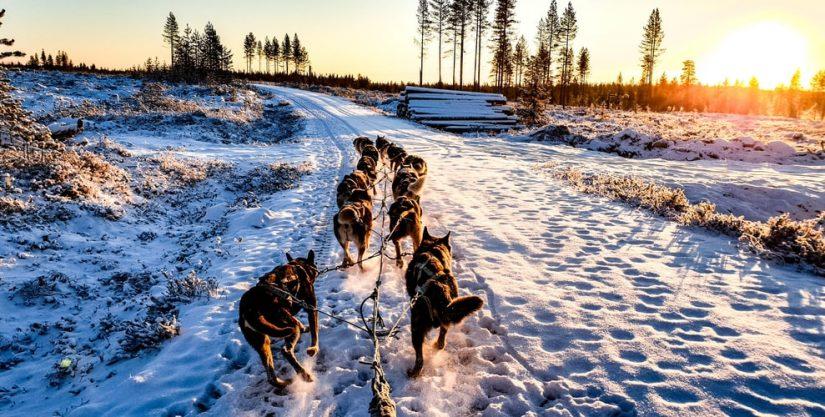 Winter FunDays – Dog Sledding in Thunder Bay